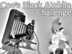Cee's Black & White Challenge