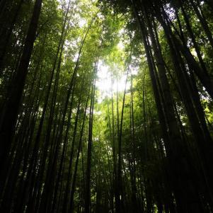 hokokū-ji