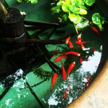 goldfish at the entrance of hokoku-ji