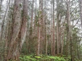 Apr Kalopa Park Hike